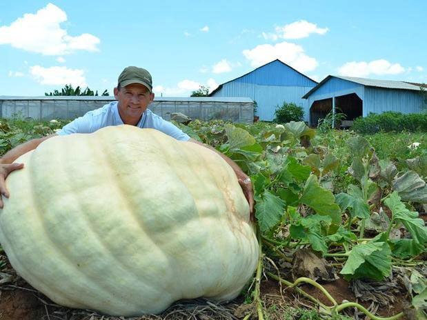 Agricultor Antonio Theisen cultivou abóbora de 286 quilos em Santa Catarina