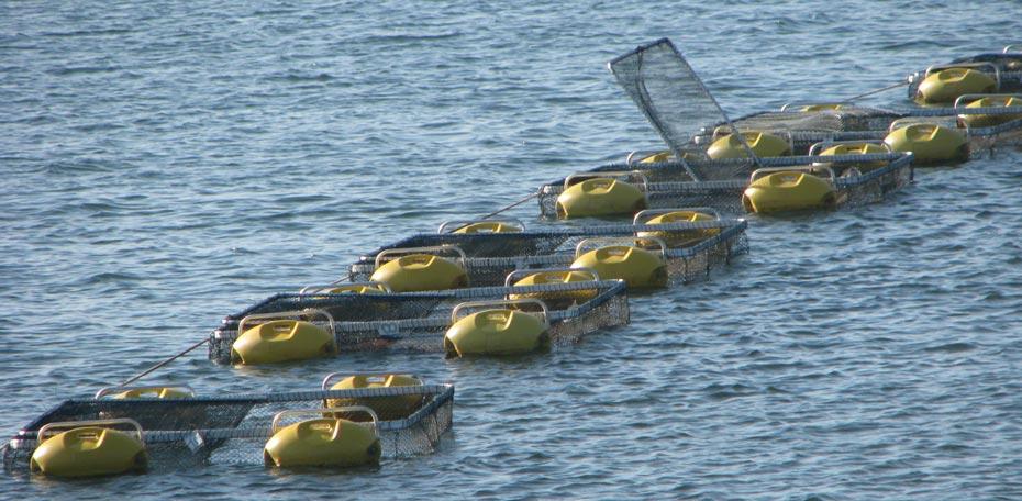 Tanque rede   Foto: Bahia Pesca
