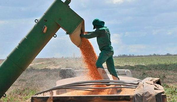 Segundo a Aiba, produtividade do milho caiu cerca de 30%   Foto: Erik Salles/Ag. Servphoto
