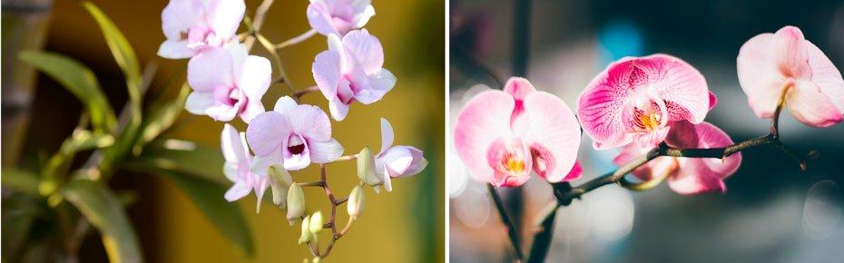 Orquídeas   Fotos: Divulgação