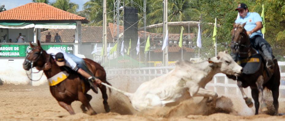 Governo do Estado defende a regularização da vaquejada na Bahia | Foto: Reprodução http://www.anda.jor.br/