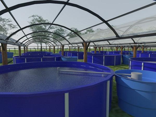 """""""Sistema de bioflocos"""" permite que o produtor passe até seis meses sem necessidade de renovar a água dos tanques de produção   Foto: Divulgação"""