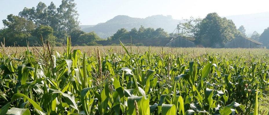 agricultores-do-oeste-da-bahia-mantem-posse-das-terras-depois-de-decisao-favoravel-no-cnj-02