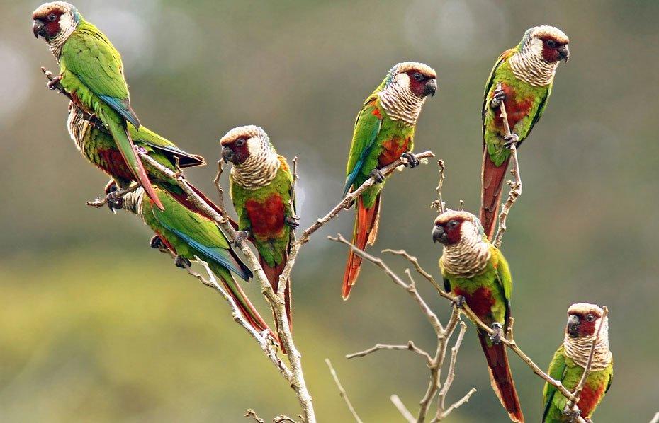 Foto: Fábio Nunes/ Fundação Grupo Boticário