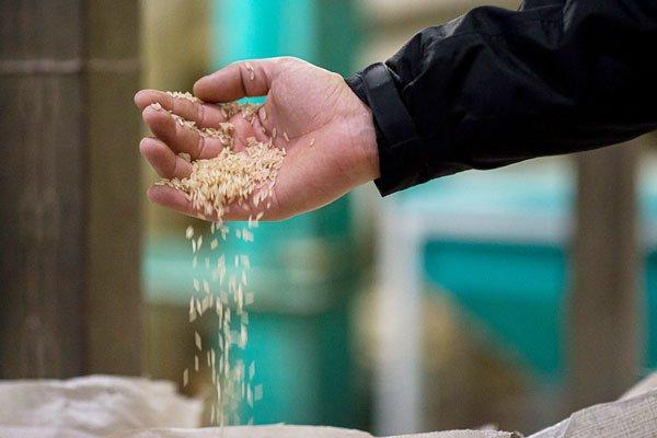 Exportacoes-de-arroz-em-2016;-veja-o-resultado-final-do-ano-01