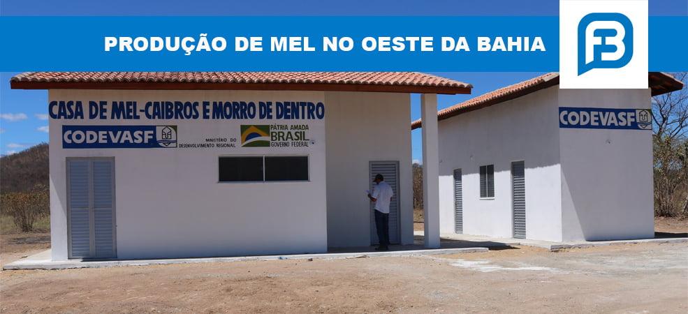 Produção de mel no Oeste da Bahia
