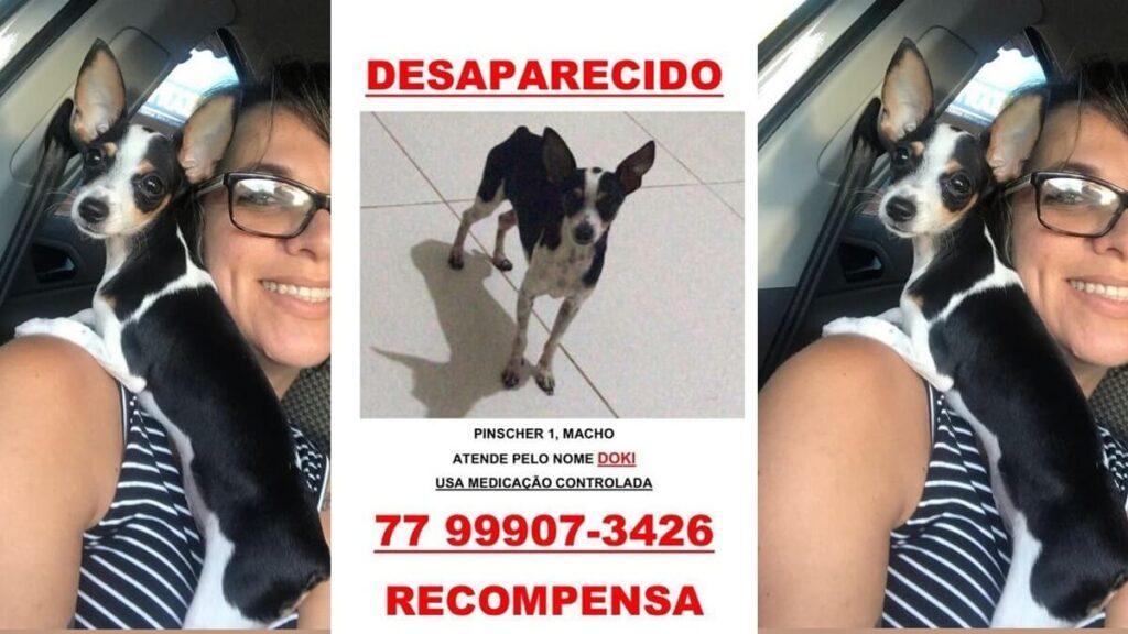Cachorro desaparecido.