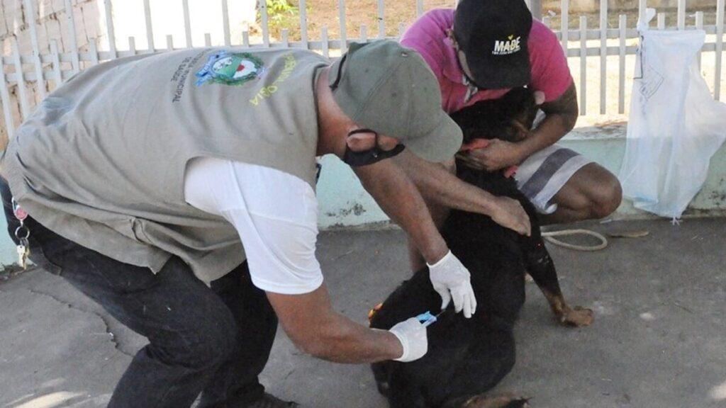 Zoonoses realiza vacinação de cães e gatos nas comunidades de Baraúna e Riachinho